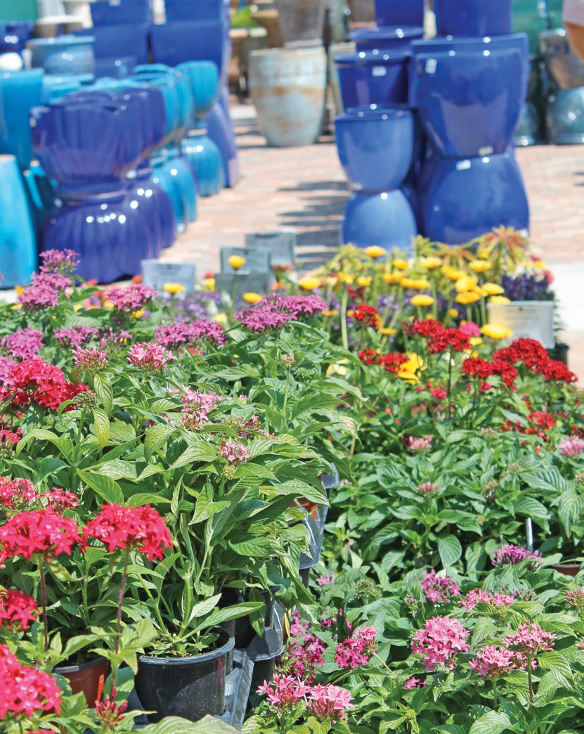 Genial Pentas And Colorful Pottery Brighten Up Driftwood Garden Center And Nursery  At The Estero Location.